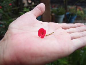 Größenverhältnis Miniblüte-Hand